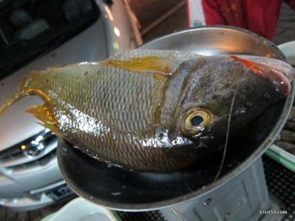 Choose your fish, they BBQ it up! - Indonesian BBQ fish in Igen, Java, Indonesia