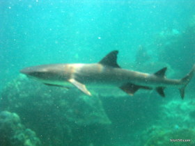 Visibility was poor, but I was still able to see this shark right in front of me
