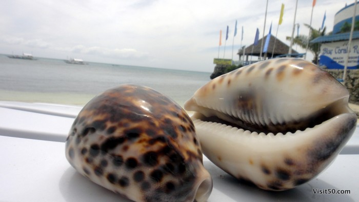 The kids tried to sell us these shells every time they saw us. Every time.
