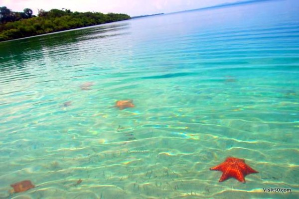 Starfish everywhere! - Playa La Estrella, Bocas del Toro is a must visit when island hopping in Bocas del Toro Panama
