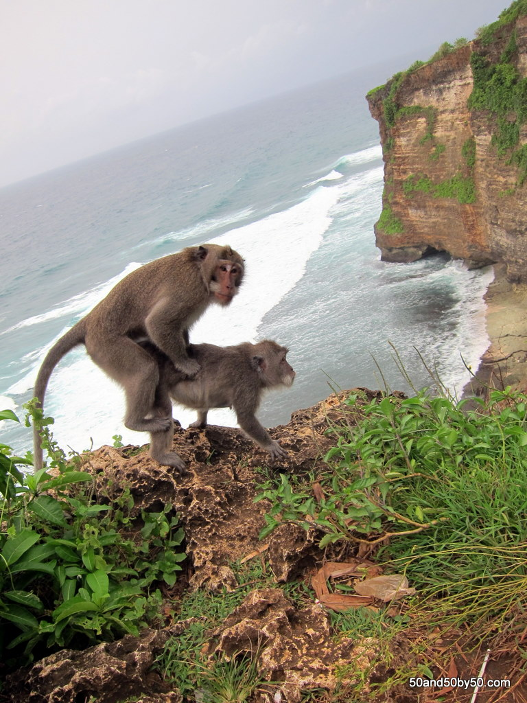 Picture of monkey having sex what